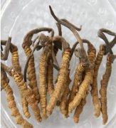 冬虫夏草的保存方法?冬虫夏草发霉了还能吃吗?