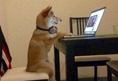 一只爱看电视的狗(图)像人一样坐着一看就是好几个小时