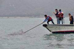 惠深合作解救被困抹香鲸 专家:鲸鱼情况不乐观