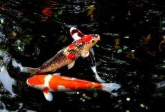 男子运河放生280条鱼 被勒令一个月内全部捞回