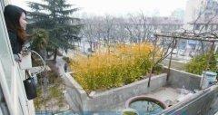 市民楼顶上建花园 在闹市中打造出田园生活(图)