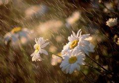 梦见太阳雨