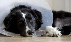 请假陪病狗被扣薪闹到法院 女主人胜诉意义深远