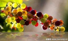 慕合怀特:一种源自西班牙的晚熟葡萄品种