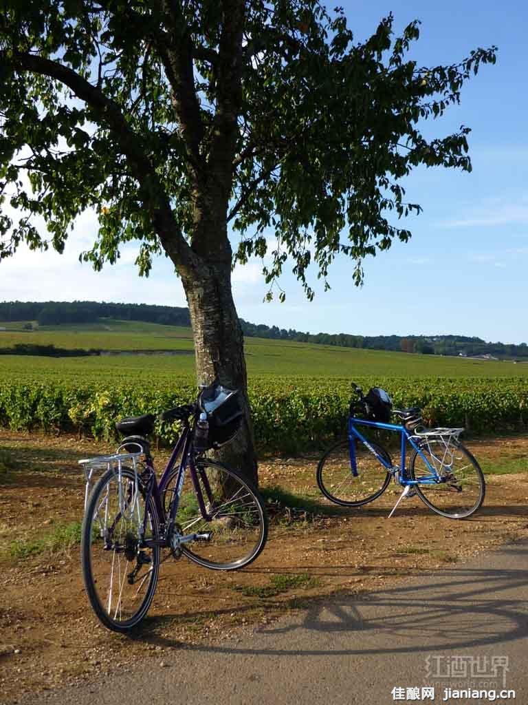 5大最值得葡萄酒爱好者游览的葡萄酒产区