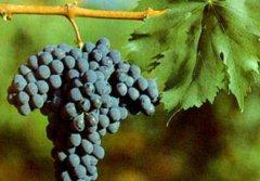 力荐4款波尔多顶级名家葡萄酒