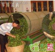 绿茶的加工