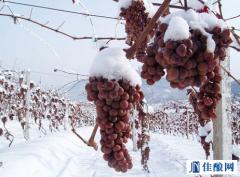 揭开新疆冰葡萄酒的神奇面纱