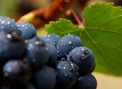 吃葡萄不吐葡萄皮?那酿葡萄酒呢?