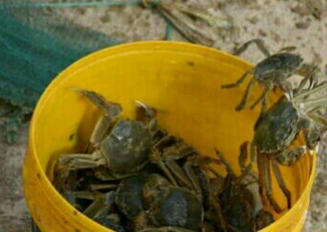 4个85后大学生荒漠里创业养螃蟹,赚的钱还真的不少