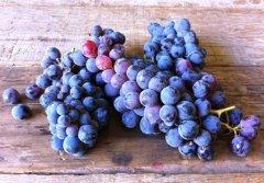 这些小众葡萄品种 你了解吗?