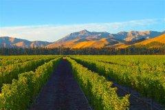 去新西兰旅游 马尔堡葡萄酒产区不可错过
