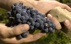 关于奥地利红葡萄酒 你了解多少?