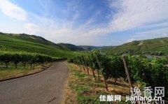 摩泽尔产区:德国最好的白葡萄酒产区之一
