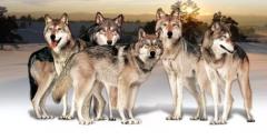 狼性团队是靠扇耳光打造出来的?