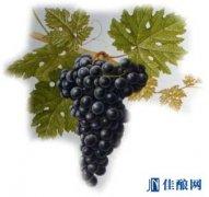 葡萄酒中的帝王——赤霞珠
