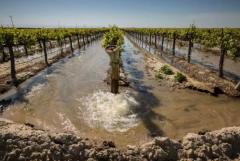 你知道葡萄园内常用的灌溉方式有哪些吗?