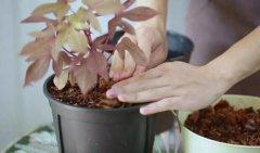 美术联考 | 植物怎么养才能度夏?比起这3个小技巧,它更需要你