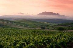 氮元素、钾元素、PH值 解密土壤对葡萄酒的影响