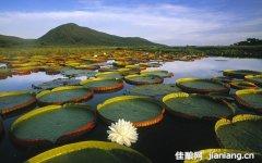 潘塔纳尔野生动物乐园:地球上最大的内陆湿地