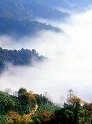 真正的西湖龙井茶产地在哪?