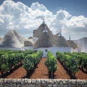 意大利普利亚特色酿酒葡萄品种概览