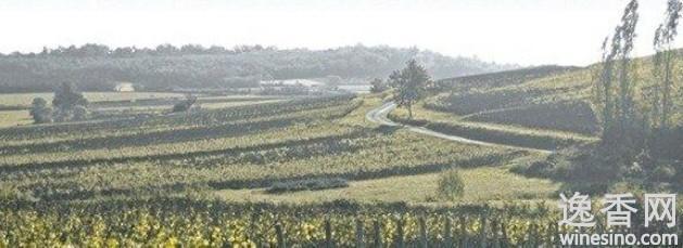 夏隆内丘:极具性价比的勃艮第优质葡萄酒产区