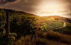去佛罗伦萨旅游 这些葡萄酒圣地不可错过