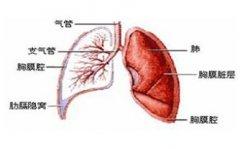 肺瘤的偏方 具体方法是哪些呢