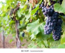 世界上最值得去的五大葡萄酒胜地