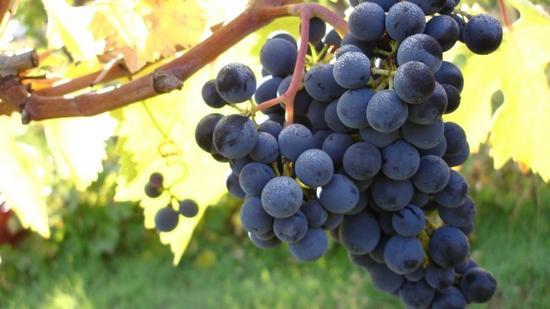 如何挑选高性价比的葡萄酒?