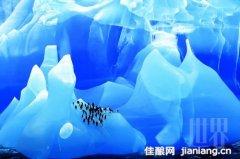 走近南极:赏庄严而美丽的蓝白冰川