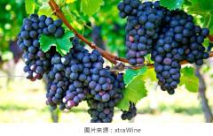 一文了解味而多葡萄酒