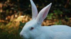多少人惊觉自己是小白兔?