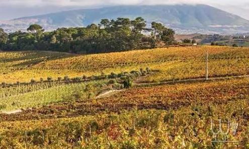里斯本葡萄酒之旅全攻略