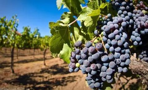 一瓶葡萄酒的价格多少才是合理的?