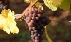 进口葡萄酒进入千亿时代 酒商如何选产品?