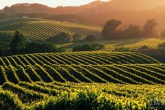 10种出游方式伴你玩转纳帕谷葡萄酒产区