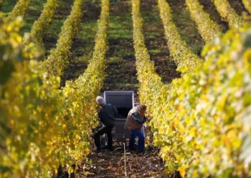 """""""好年份""""葡萄酒的标准到底是什么?"""