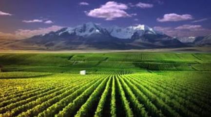 宁夏葡萄酒追逐世界梦