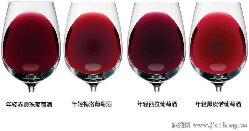 9种最常见的红葡萄品种酒