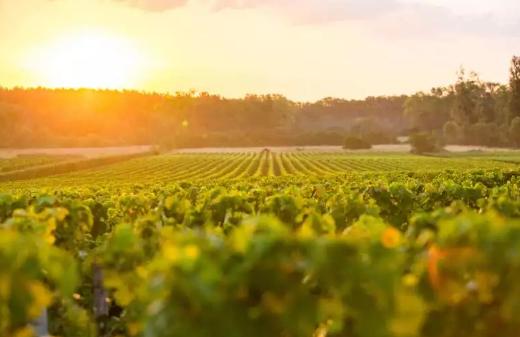 格拉夫:波尔多红葡萄酒的摇篮