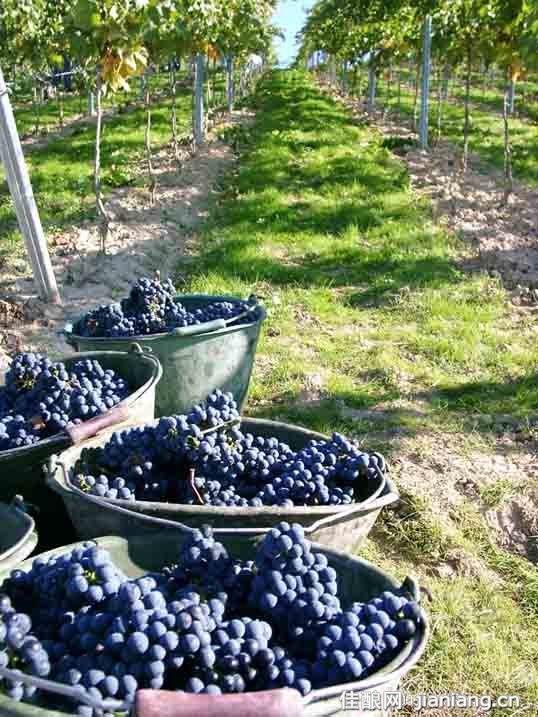 中秋葡萄酒产区游的黄金规则,葡萄酒,红酒,酒圈网