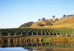 澳洲葡萄酒旅游之雅拉河谷