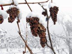 加拿大冰酒十大要点(附冰酒饮用方法)
