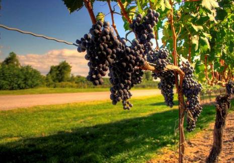 十月哪些葡萄酒产区最适合酒迷们度假?